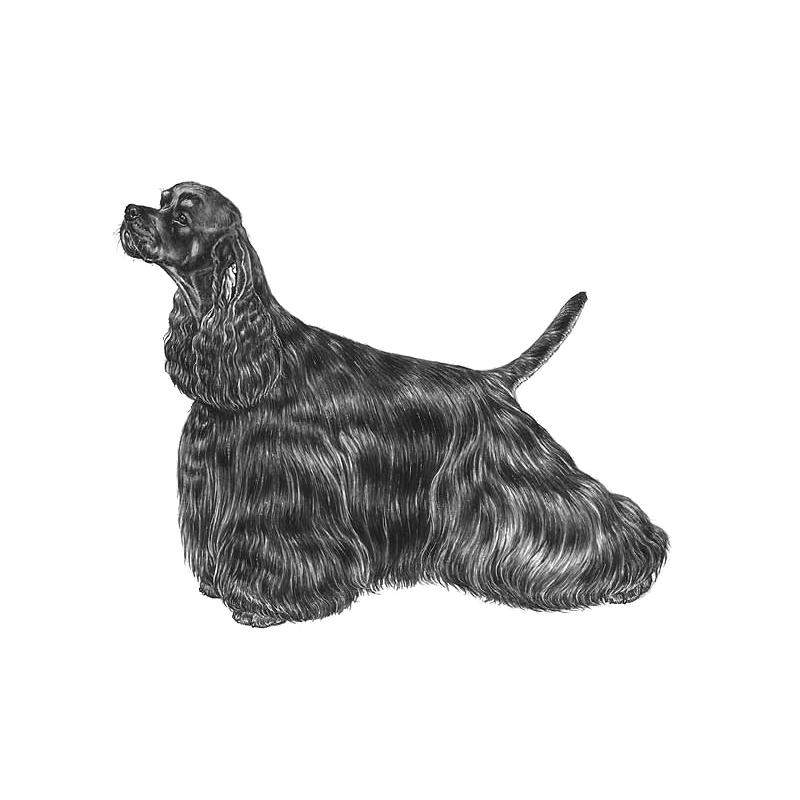 Norwegian Kennel Club Partners Dogwellnet Com