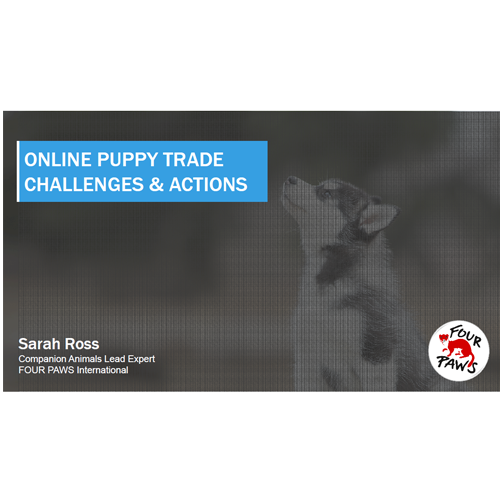 supply-demand-online-puppy-trade.png