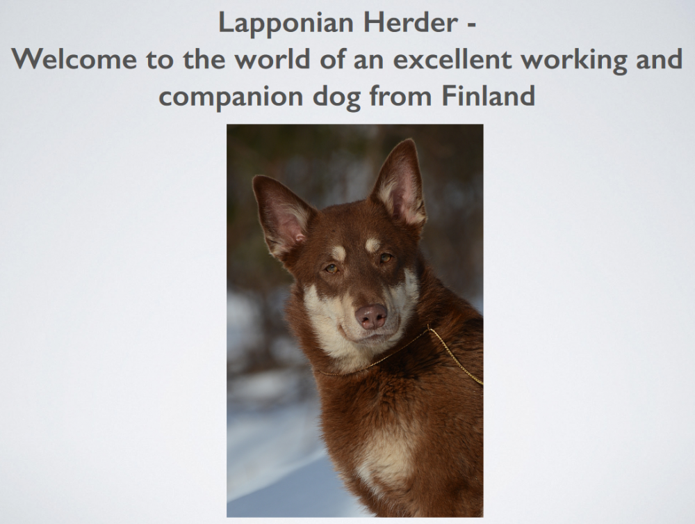 lapponian-herder-judgesguide-fci.png