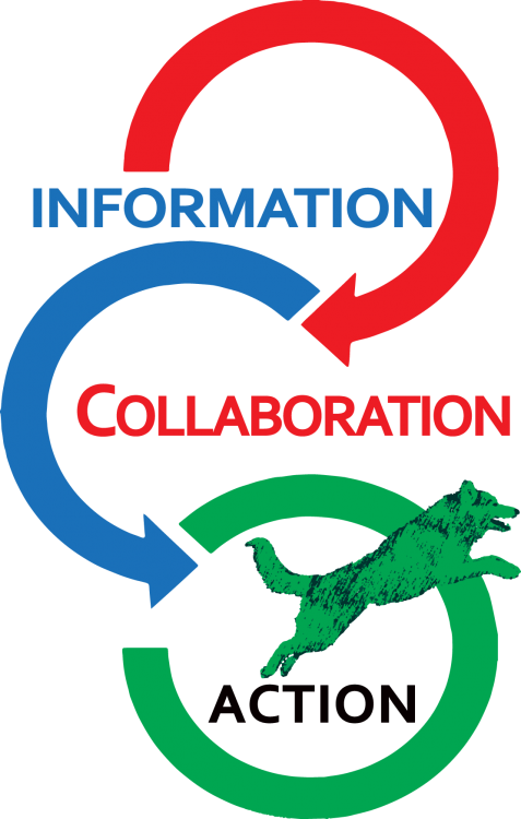 information-collaboration-action-jumping-dog.png