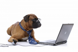 boxer_and_computer.thumb.png.877ae3fe407