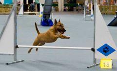 jumpingdogsm.thumb.jpg.8e70318ad2e8042bf