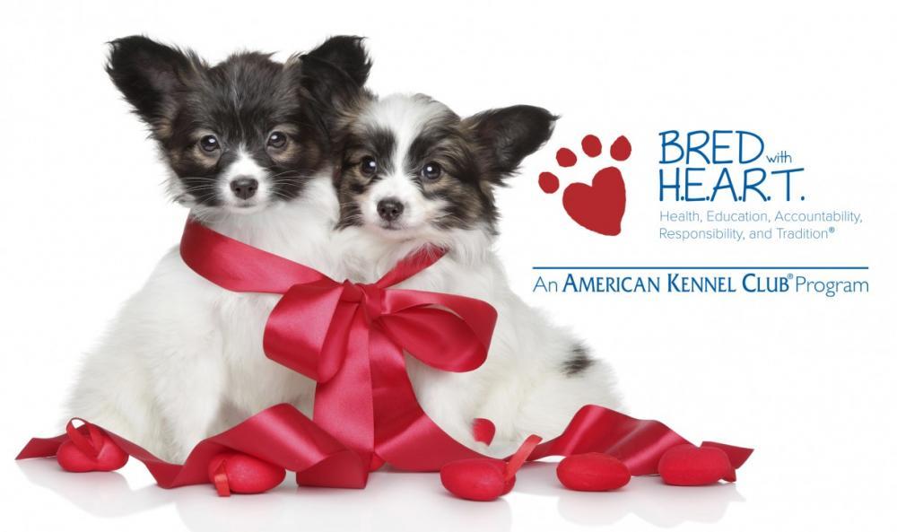 BWH_puppies_logo.jpg