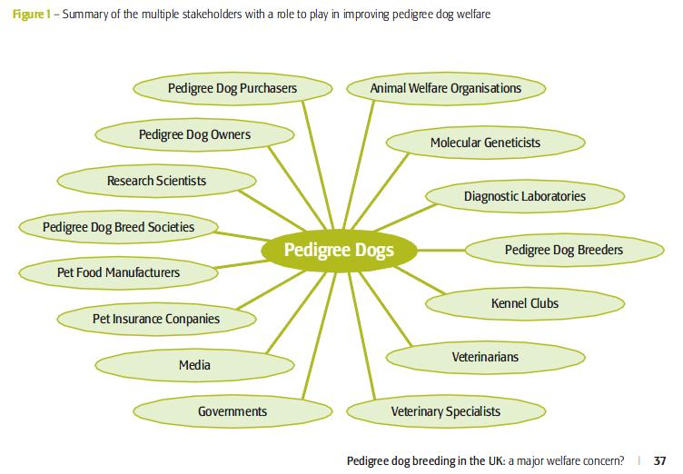 rspcareport-stakeholders.png