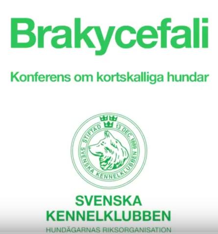 brachykonferens.png
