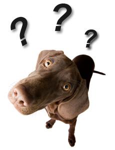 dog-question.jpg