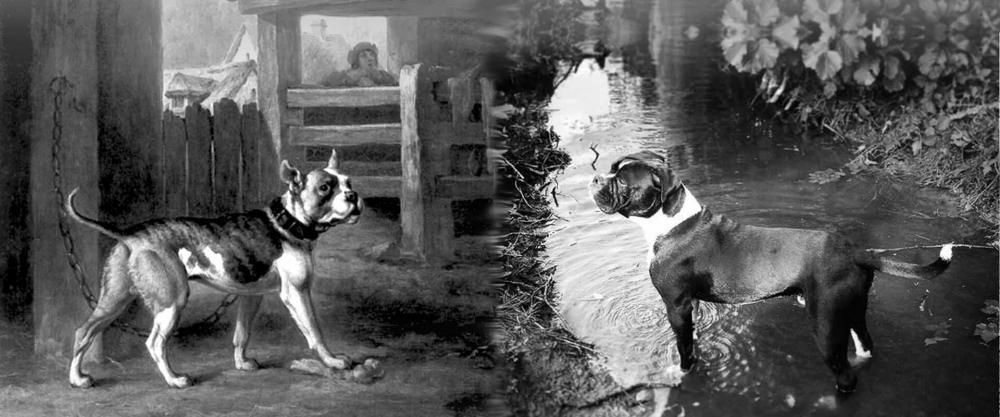 slider-leavitt-bulldog-historien.jpg