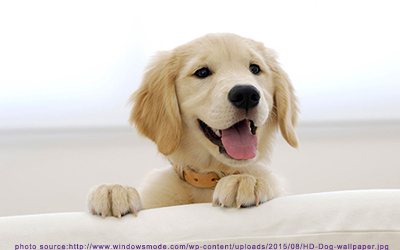 adorable-dog-kelly.png
