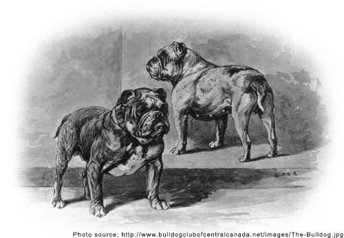 bulldogpast.jpg