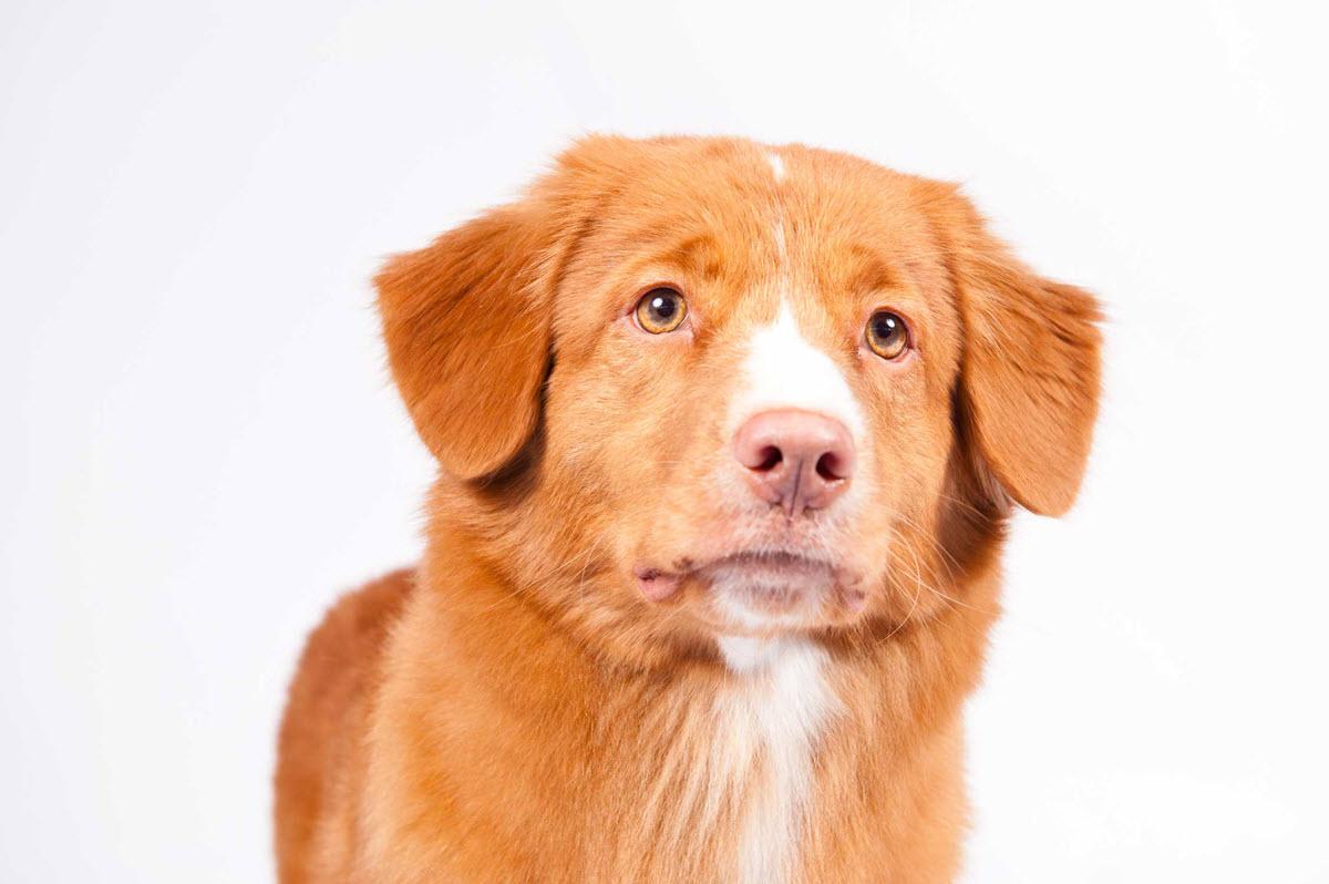 Dog Kennel Insurance