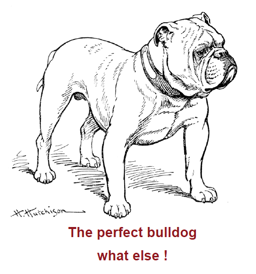 cbaperfectbulldogwhatelse.png