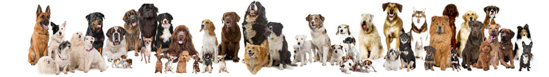 dogs group.jpg