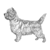 cairn-terrier-100x100-fci004.png