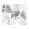 cavalier-king-charles-spaniel-100x100-fci136.png