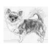 chihuahua-long-coat-100x100-fci218.png