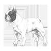 french-bulldog-100x100-fci101.png