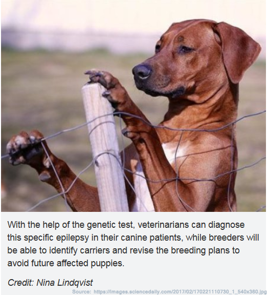 ridgeback-research-epilepsy---screencap-science-direct.png