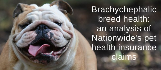 nationwidebrachy2.jpg