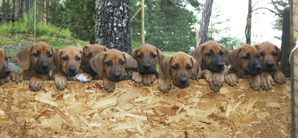 Best Antibiotic For Mastitis In Dogs