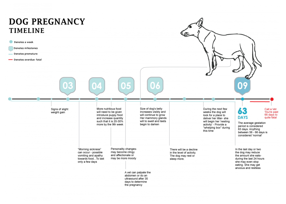 dogpregnancychart1400.png