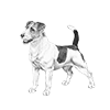 jack-russel-terrier-100x100-fci345.png