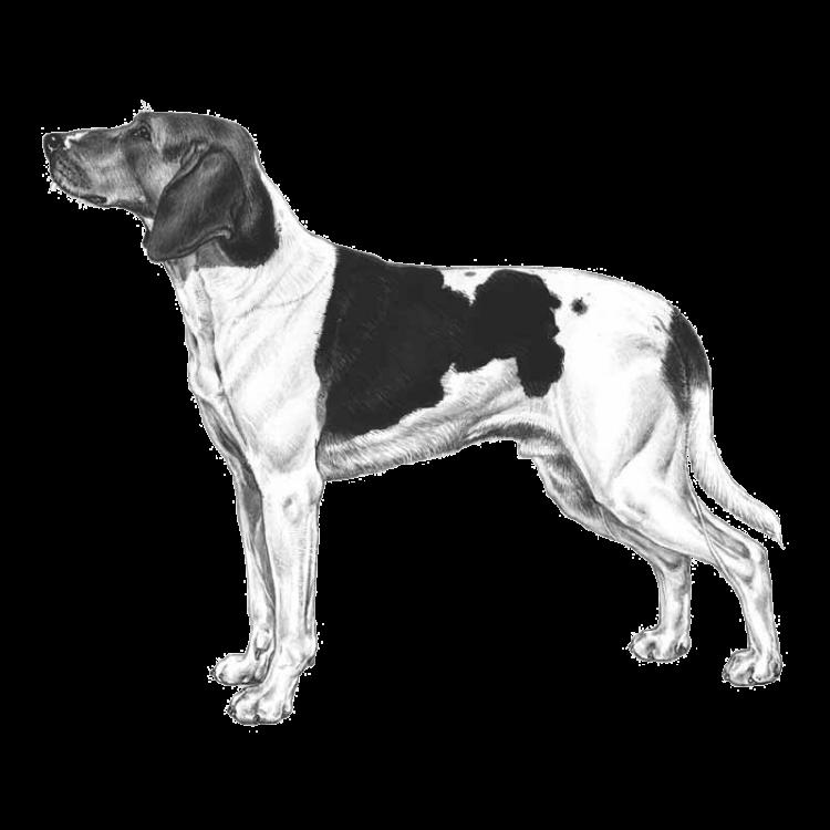 halden-hound-800x800-fci267.png