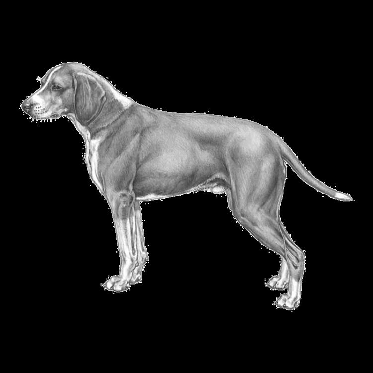 hygen-hound-800x800px-fci266.png