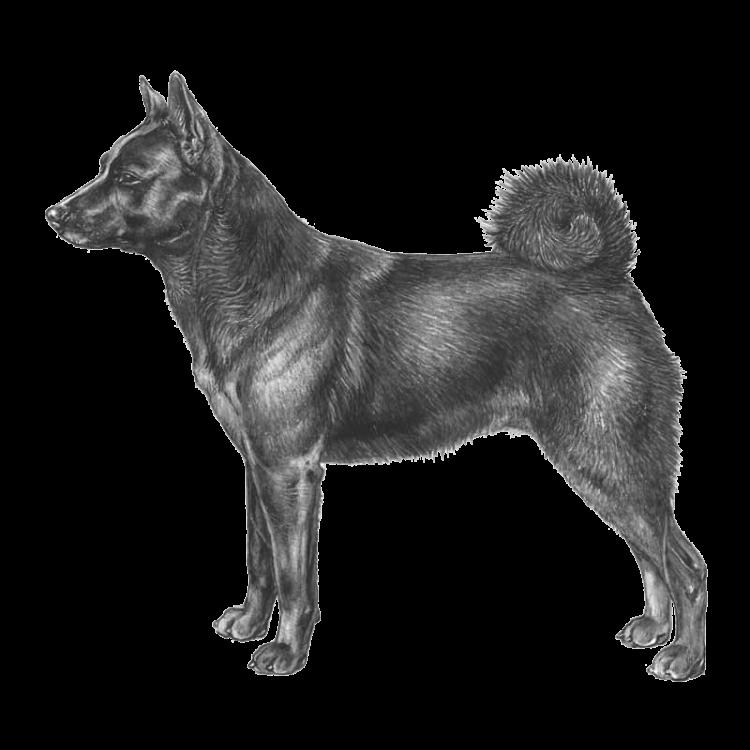 norwegian-elkhound-black-800x800-fci268.png