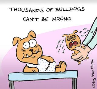 Caesarean Bulldog.jpg