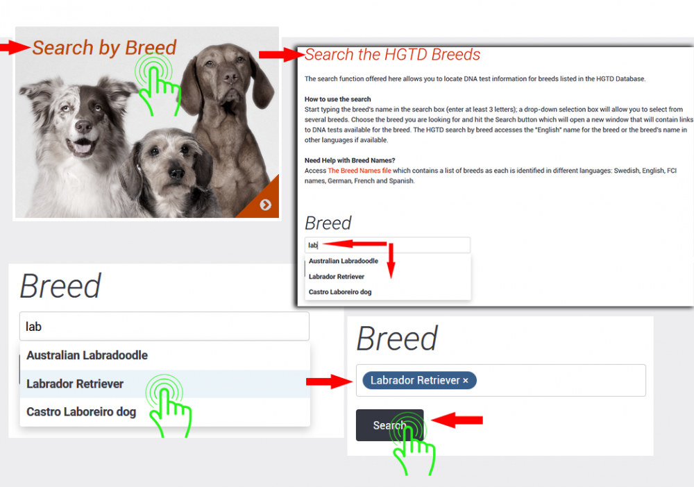 searchbybreed-instruction1web.png