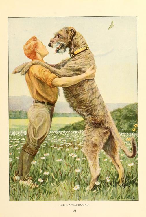 Irish_wolfhound-graphic.jpg