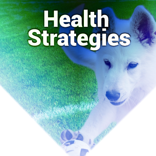 Health Strategies Guide