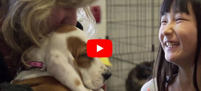 Adorable Hazel and Why One Welfare Can Help Address Breeding Dog Challenges