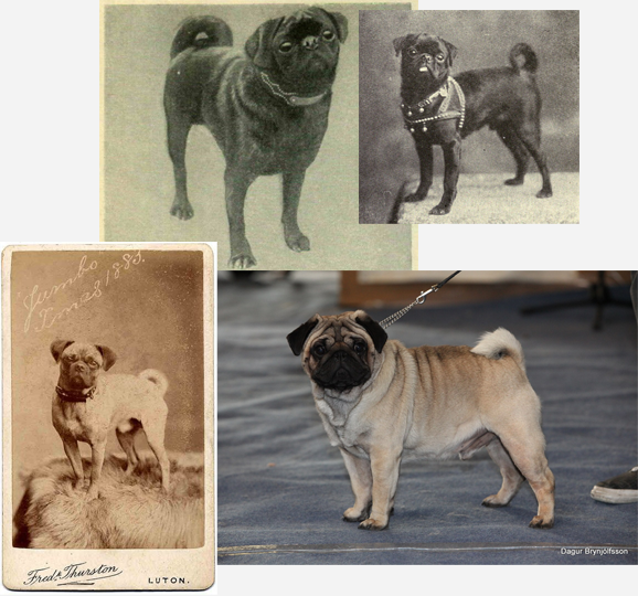 pugs-then...now.png