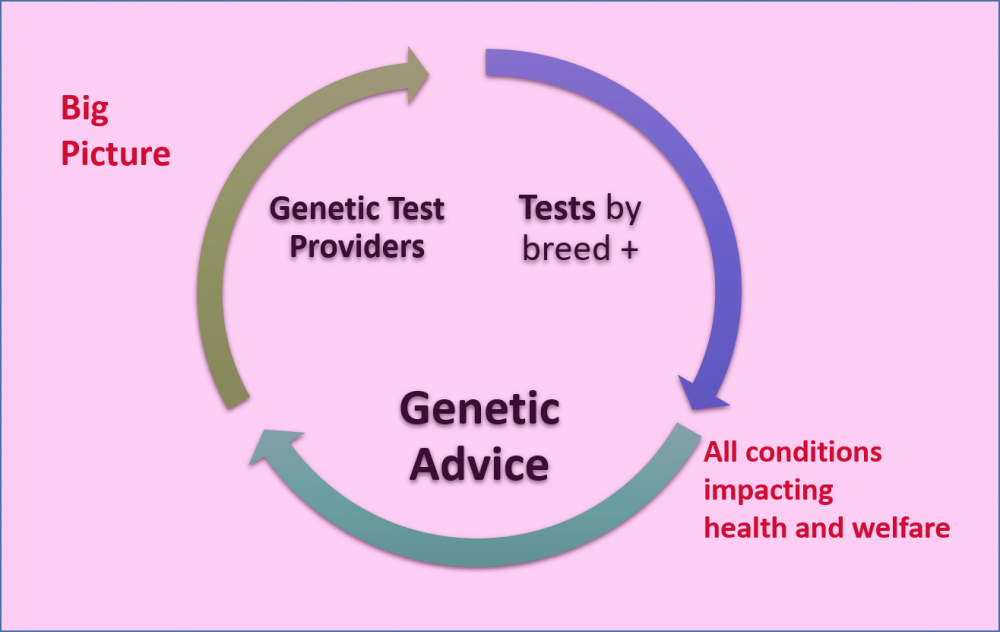 genetic testing graphic3.png