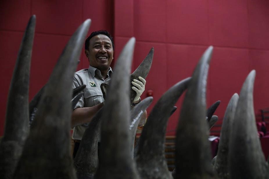 rhino horns2.jpg