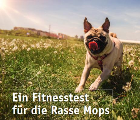 fitnesstestformopsflyer2-vdh.png