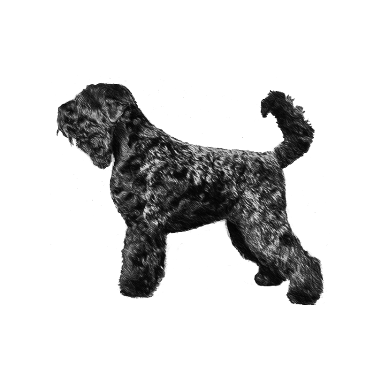 russian-terrier-800x800-fci327.png