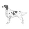 irish-red-and-white-setter-100x100-fci330.png