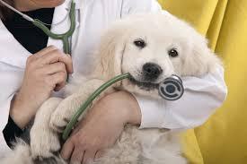 puppy stethescope.jpg