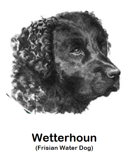 wetterhouninfo.png