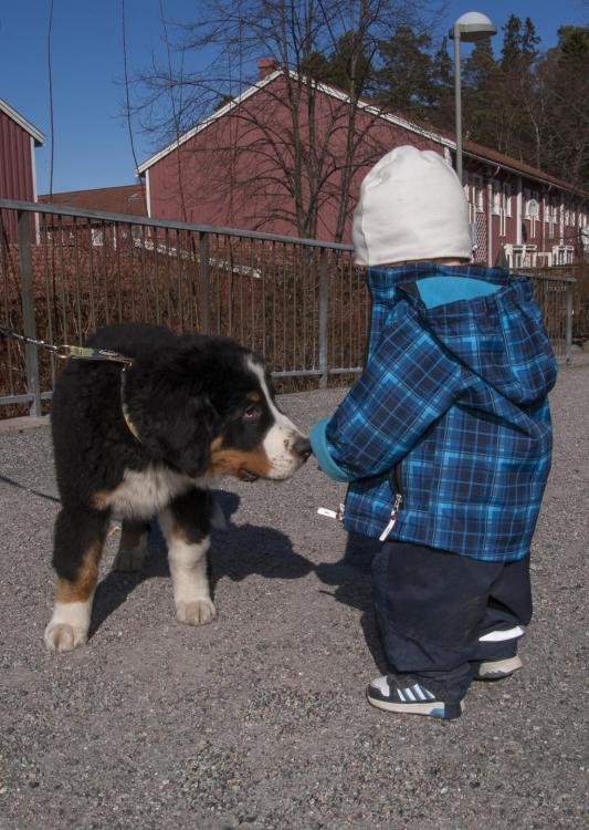 Berner and kid.jpg