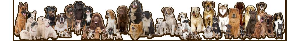 dog banner ann.png