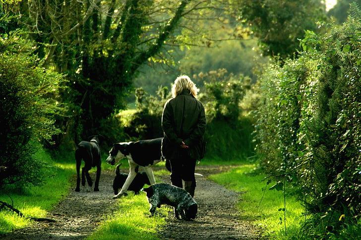 animals-dogs-lady-path.jpg