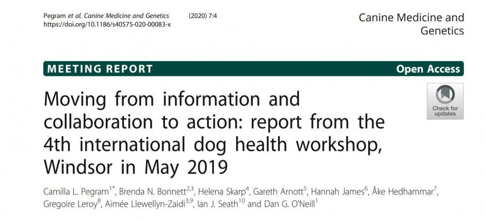 Canine Medicine.jpg
