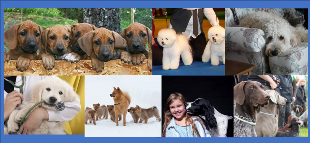 Collage all dogs (2).png